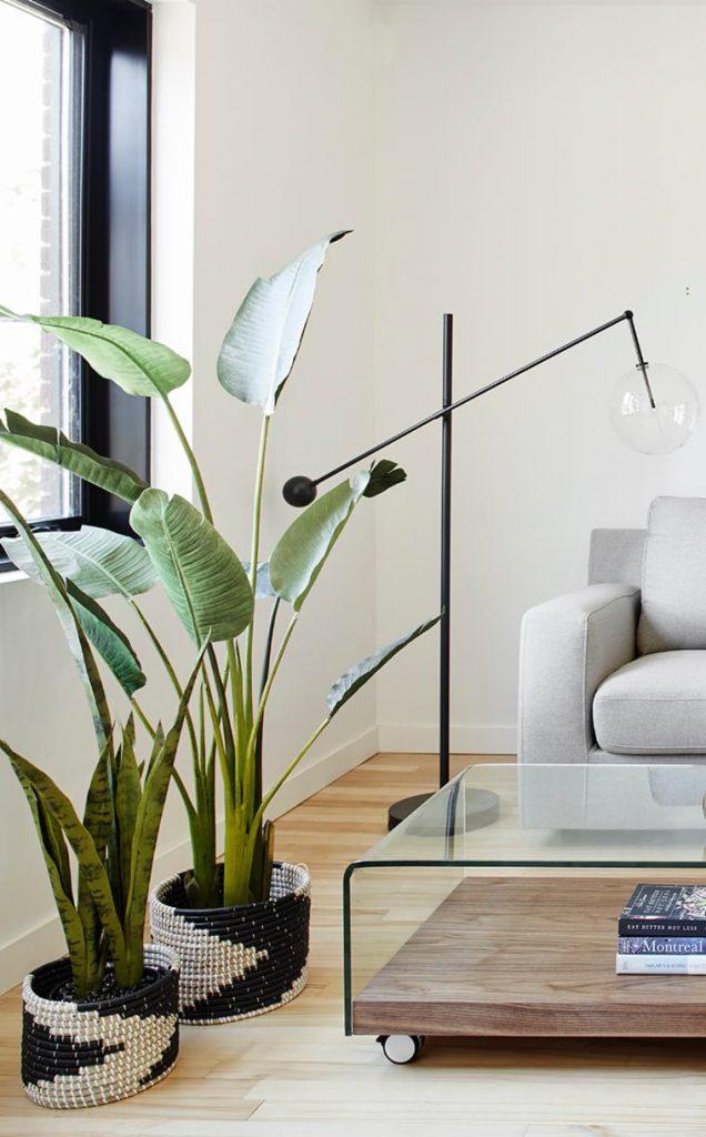 Plante dans un petit espace